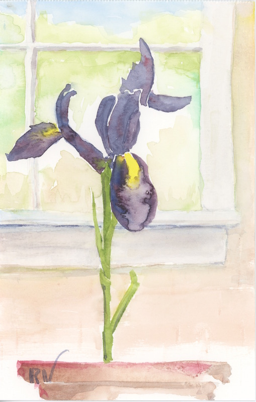 Iris with window