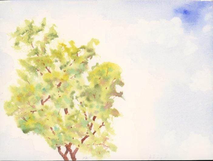 bush doodle