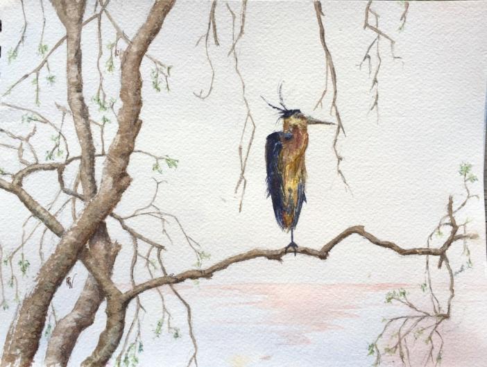 Swamp heron (1)