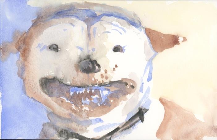 Aven's dog