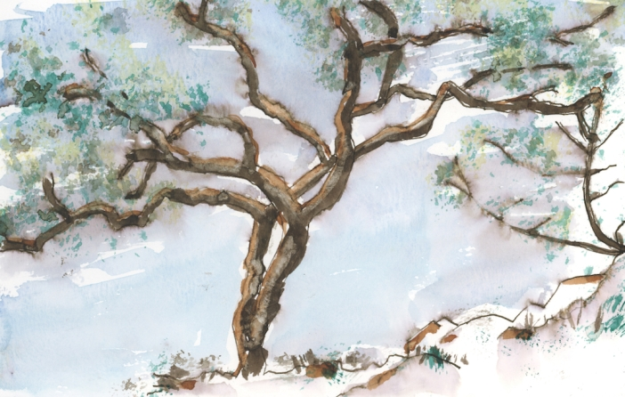 Study of Rockport Tree